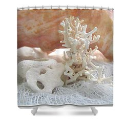 White Urchin Light Pink Corals And Conch Seashell Shower Curtain
