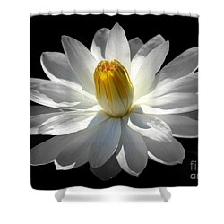 White Water Lily #2 Shower Curtain