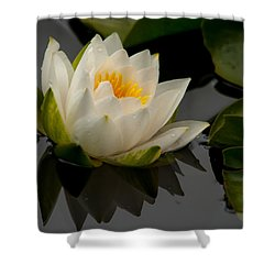 White Water Lily 3 Shower Curtain