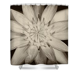 Lotus Shower Curtain by Ulrich Schade