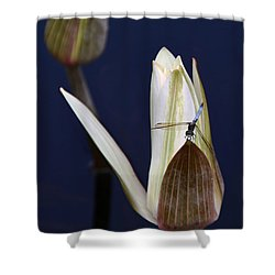 Under Careful Inspection Shower Curtain by Yvonne Wright