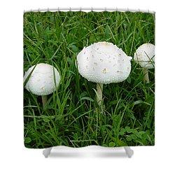 White Wild Mushrooms Shower Curtain