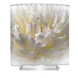 White Peony With A Dash Of Yellow Shower Curtain by Sherman Perry