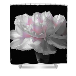 Shower Curtain featuring the digital art White With Pink Carnation by Jeannie Rhode