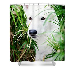 Shower Curtain featuring the photograph White Wolf by Erika Weber