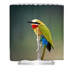Whitefronted Bee-eater Shower Curtain by Johan Swanepoel