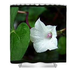 Shower Curtain featuring the photograph Wild Whitestar Morning Glory by William Tanneberger