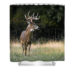 Whitetail At Sunset Shower Curtain