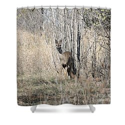 Whitetail Undercover Shower Curtain by Lori Tordsen
