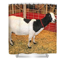 Who Ate The Walls? Maybe The Blue-eyed Goat Shower Curtain by Connie Fox