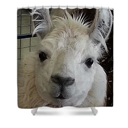 Shower Curtain featuring the photograph Who Me Llama by Caryl J Bohn