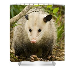 Who Says Possums Are Ugly Shower Curtain