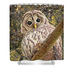 Who Who Are You Barred Owlet Shower Curtain by Jennie Marie Schell