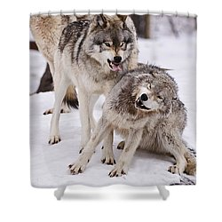 Shower Curtain featuring the photograph Who's The Boss by Wolves Only