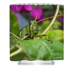 Who's There Squared Shower Curtain by TK Goforth