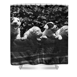 why I Love A Dog Prizes Shower Curtain by Underwood Archives