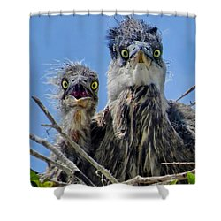 Wide Eyed Baby Herons Shower Curtain by Jennie Breeze
