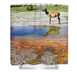 Wild And Free In Yellowstone Shower Curtain by Teresa Zieba