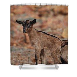 Wild Baby Goat Shower Curtain by DejaVu Designs