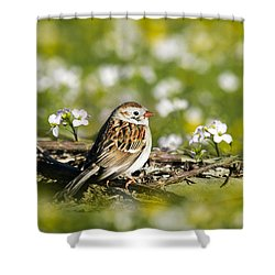 Wild Birds - Field Sparrow Shower Curtain by Christina Rollo