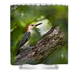Red Bellied Woodpecker Shower Curtain by Christina Rollo