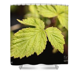 Wild Black Raspberry Leaves Shower Curtain by J McCombie