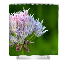 Wild Blue - Chive Blossom Shower Curtain by Adam Romanowicz