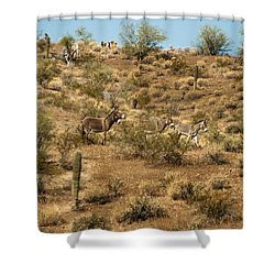 Wild Burros Shower Curtain by Robert Bales