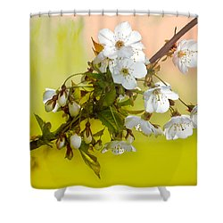 Wild Cherry Blossom Cluster Shower Curtain by Jane McIlroy
