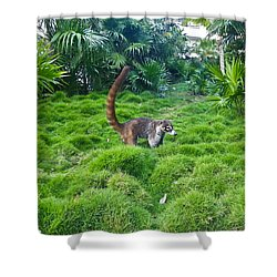 Wild Coati Shower Curtain by Eti Reid