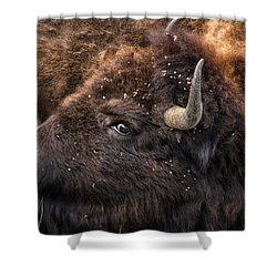Wild Eye - Bison - Yellowstone Shower Curtain