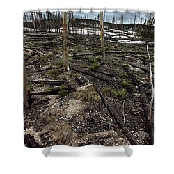 Shower Curtain featuring the photograph Wild Fire Aftermath by Amanda Stadther