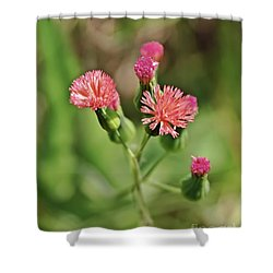 Shower Curtain featuring the photograph Wild Flower by Olga Hamilton
