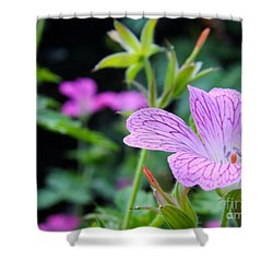 Wild Geranium Flowers Shower Curtain by Clare Bevan