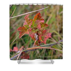 Shower Curtain featuring the photograph Wild Gooseberry Leaves by Ann E Robson