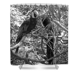 Shower Curtain featuring the photograph Wild Hawaiian Parrot Black And White by Joseph Baril