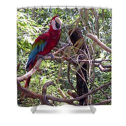 Shower Curtain featuring the photograph Wild Hawaiian Parrot  by Joseph Baril