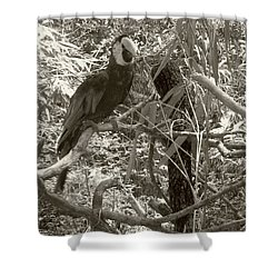 Shower Curtain featuring the photograph Wild Hawaiian Parrot Sepia by Joseph Baril