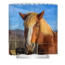 Wild Horse At Cades Cove In The Great Smoky Mountains National Park Shower Curtain