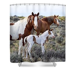 Wild Horse Family Portrait Shower Curtain