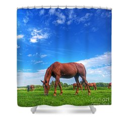 Wild Horse On The Field Shower Curtain by Michal Bednarek