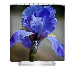 Wild Iris Shower Curtain by Ron White