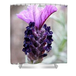 Wild Lavender Shower Curtain by Lainie Wrightson