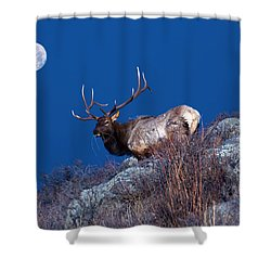 Wild Moon Shower Curtain by Shane Bechler