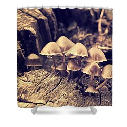 Wild Mushrooms Shower Curtain by Amanda Elwell