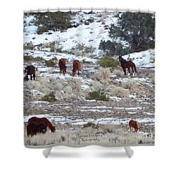 Wild Mustangs In A Nevada Winter Shower Curtain