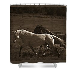 Wild Mustangs Of New Mexico 10 Shower Curtain
