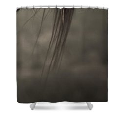Wild Mustangs Of New Mexico 11 Shower Curtain