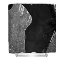 Wild Mustangs Of New Mexico 33 Shower Curtain