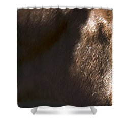 Wild Mustangs Of New Mexico 41  Shower Curtain
